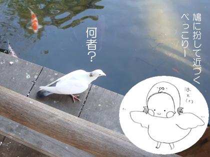 鑁阿寺の鳩とぺっこりー